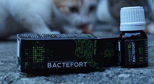 bactefort pret pareri foro farmacia prospecto